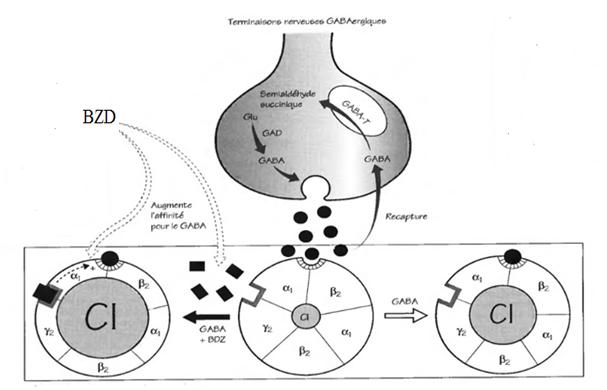 Figure 12: le mode d'action des benzodiazépines.