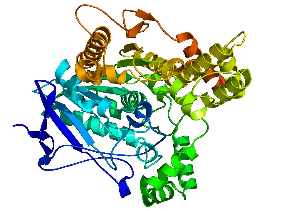 Acethylcholinesterase_TC_1EA5