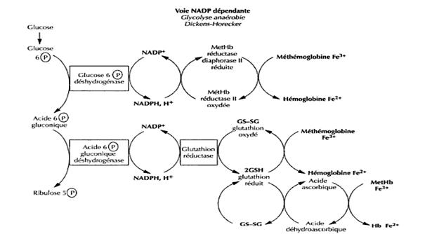 Réduction de la méthémoglobine
