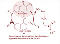 Mécanisme de la toxicité de la ménadione