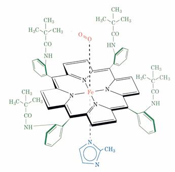 Structure de l'oxyhémoglobine