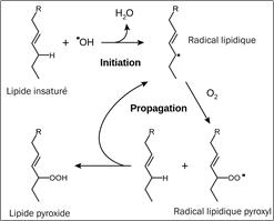 Figure 4.2. Mécanisme général de la peroxydation des lipides.