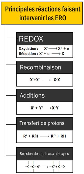 Figure 9.11. Principales réactions faisant intervenir des ERO