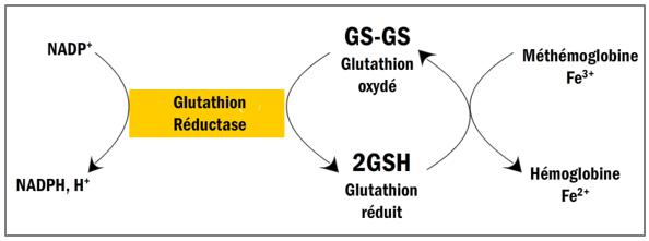 Réduction par le glutathion