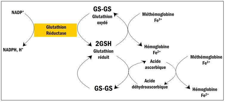 Réduction par l'acide ascorbique